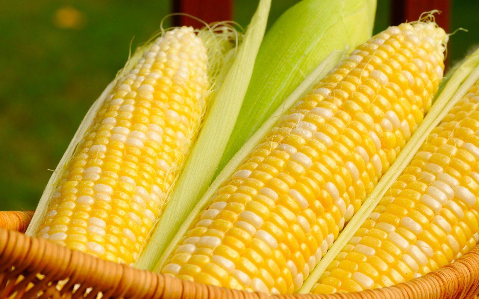 corn_slider-1-e1581509153373.jpg