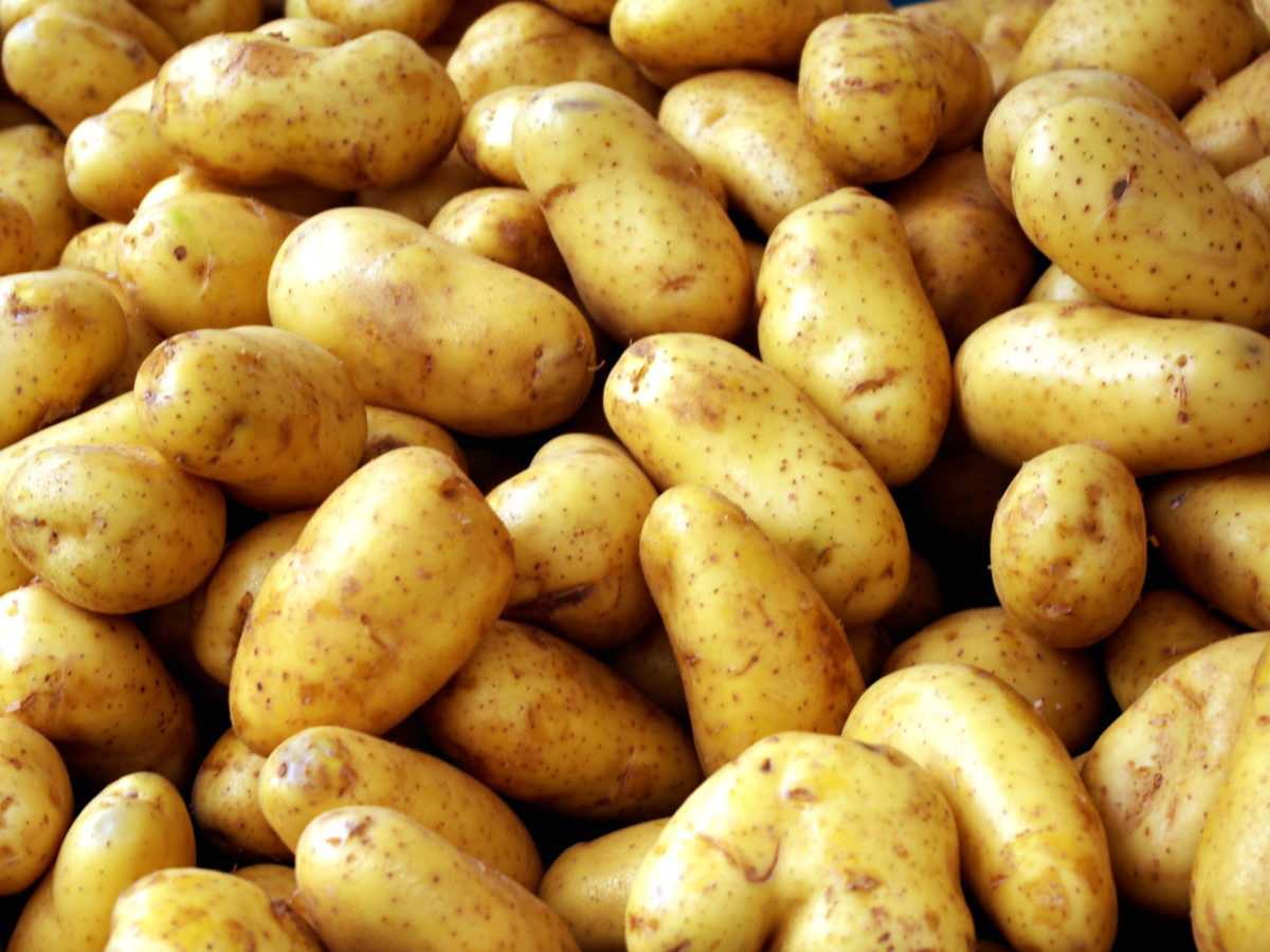 potato_Luisana-e1581437077714.jpg